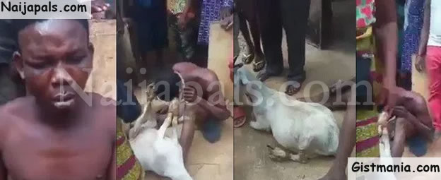 People having sex with goats