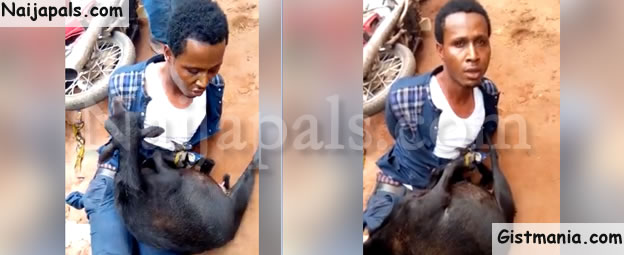 Pastor Disgraced After Being Caught Stealing Goat In Anambra State