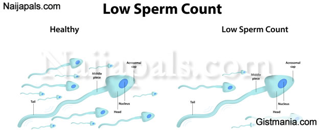 Male sperm production and antibotics