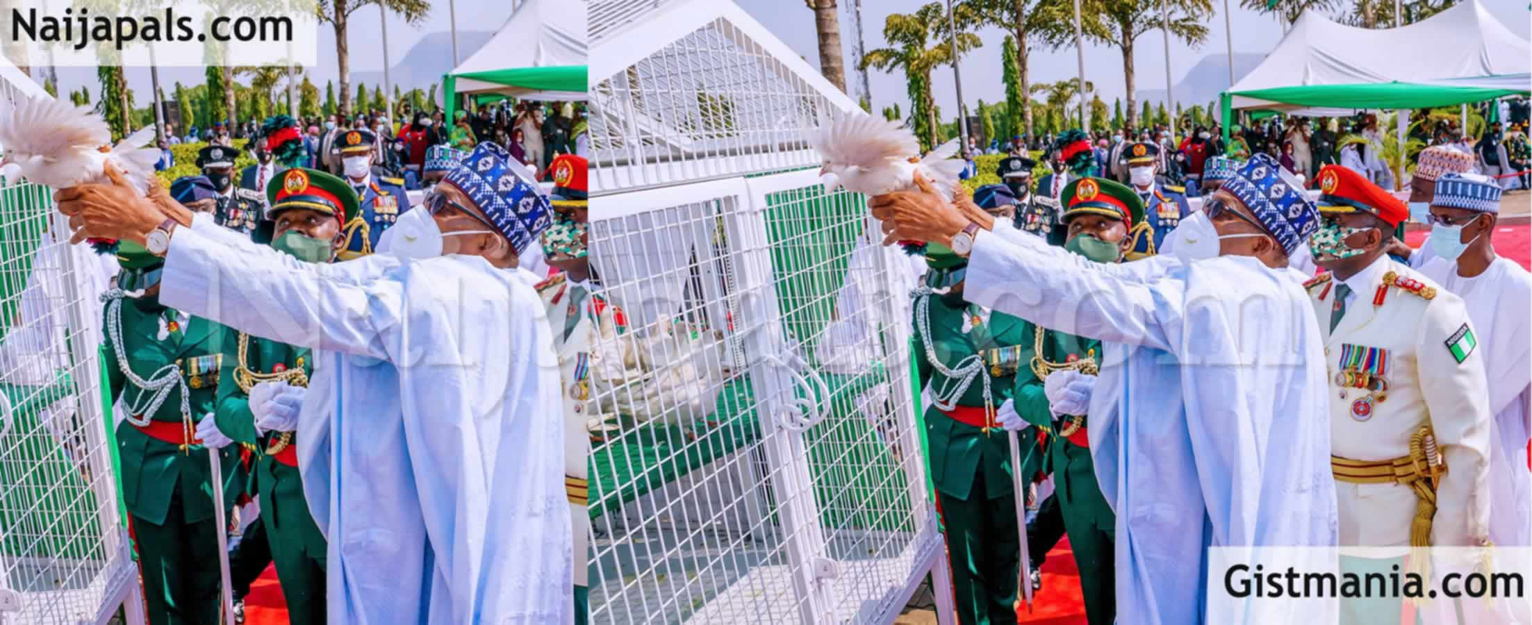 <img alt='.' class='lazyload' data-src='https://img.gistmania.com/emot/comment.gif' /> <b>Why The Pigeons Released By Buhari on Armed Forces Remembrance Day Refused to Fly</b>