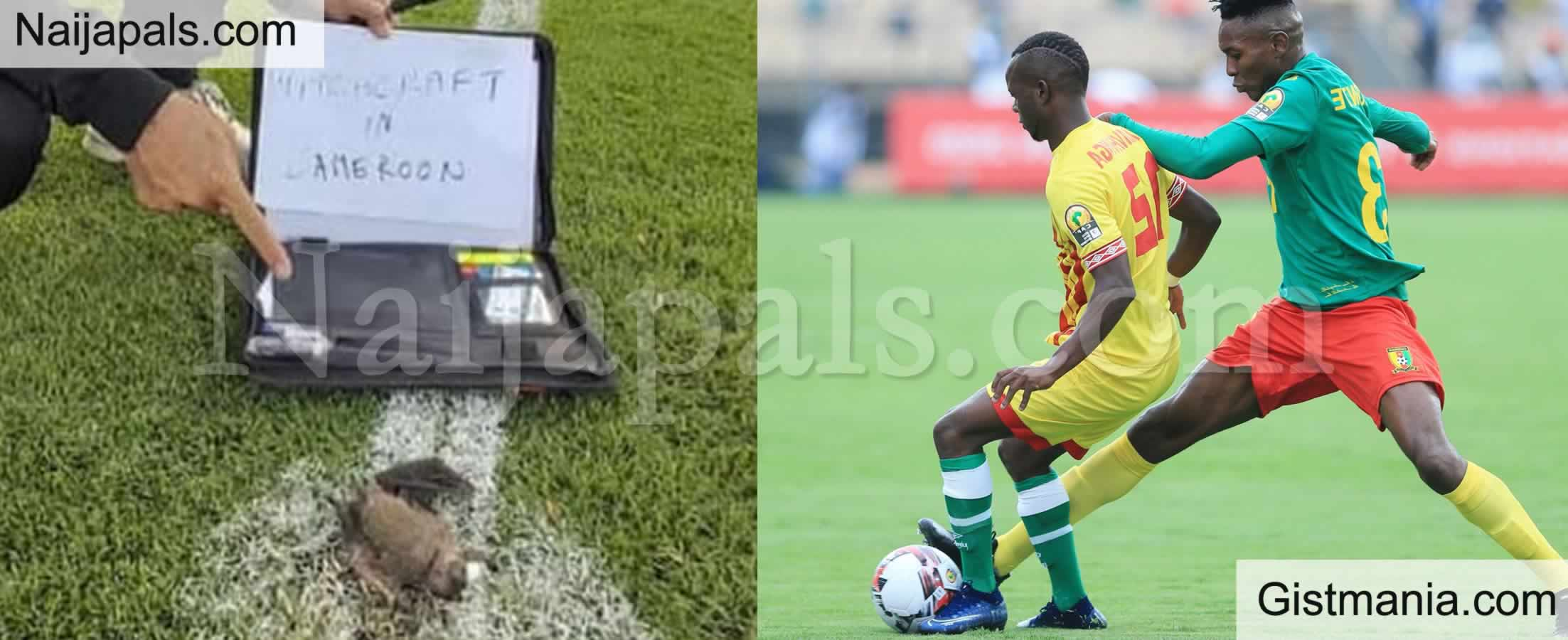 <img alt='.' class='lazyload' data-src='https://img.gistmania.com/emot/comment.gif' /> PHOTO: <b>Zimbabwe Accuses Cameroon of Witchcraft as Dead bat is Found on Pitch</b>