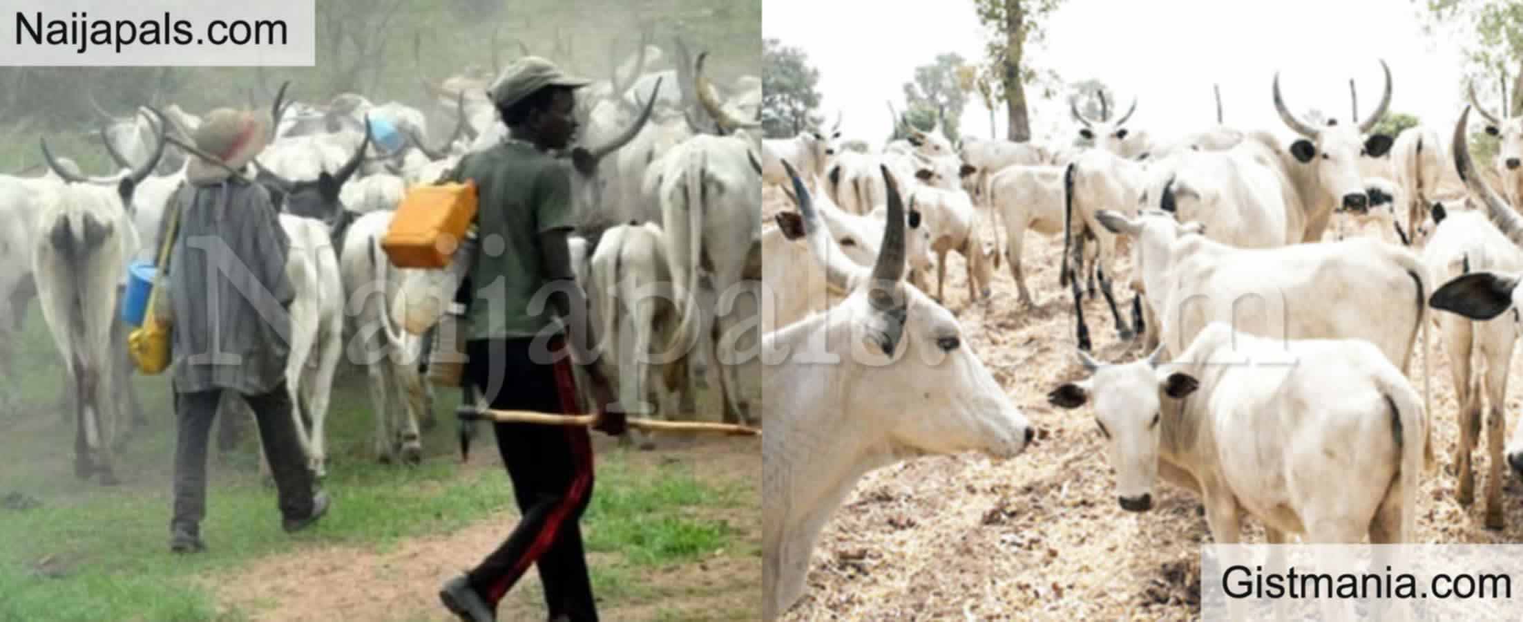 <img alt='.' class='lazyload' data-src='https://img.gistmania.com/emot/news.gif' /><b>Cattle Dealers Begin Strike Thursday As They Demand Payment Of N475 billion</b>