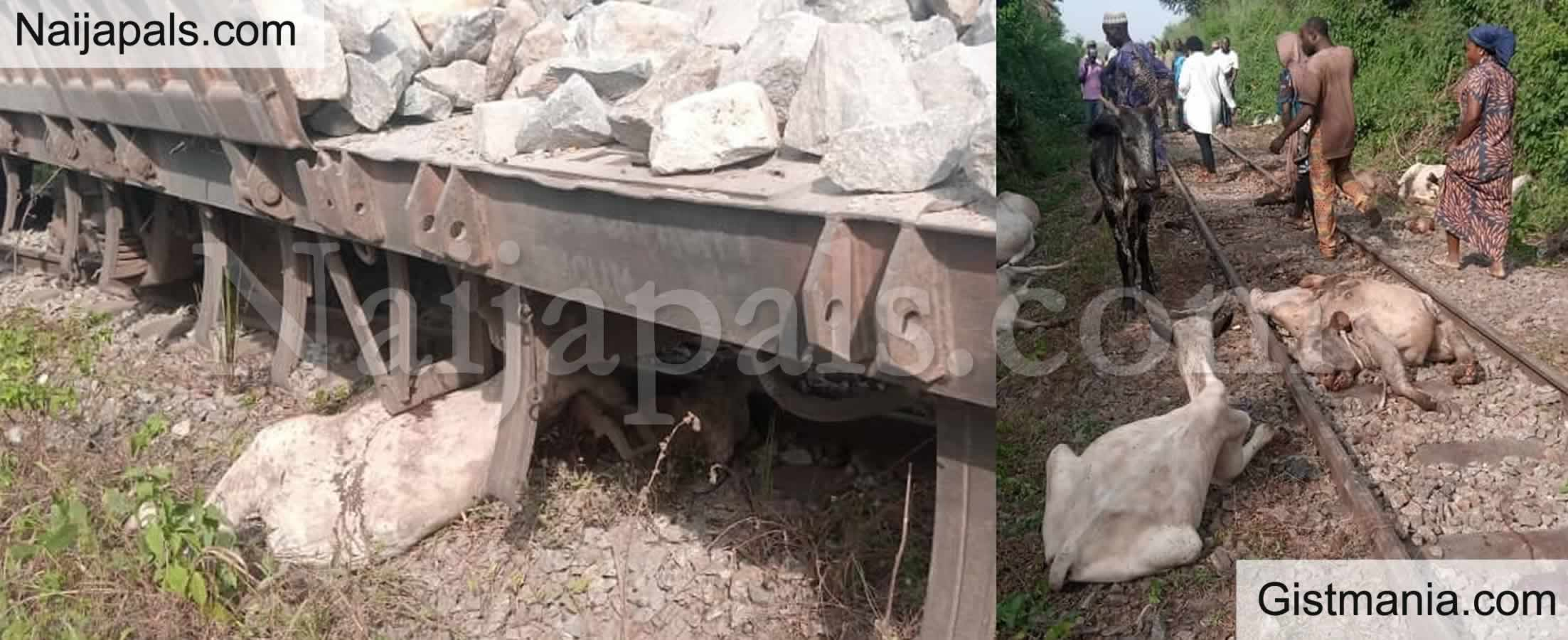 <img alt='.' class='lazyload' data-src='https://img.gistmania.com/emot/shocked.gif' /> Herdsmen Count Their Losses As <b>Train Crushes Over 45 Cows to Death in Osun</b>