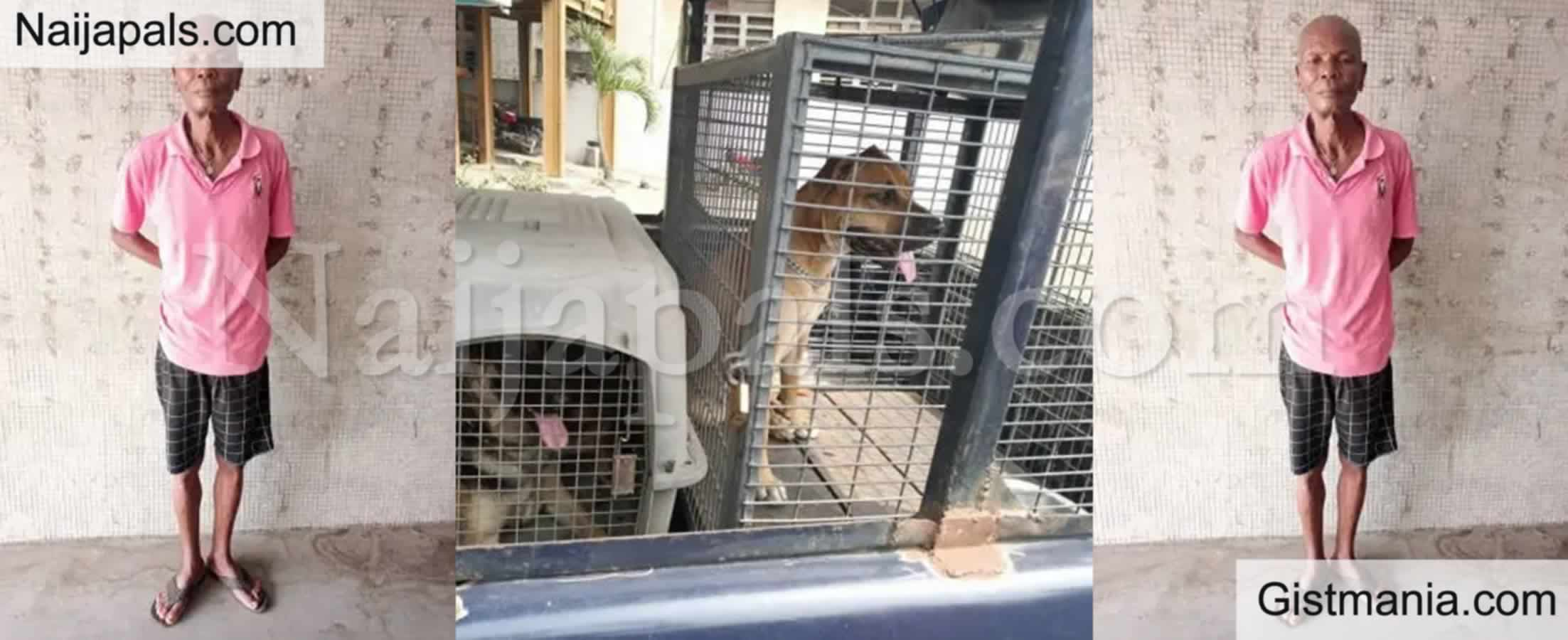 <img alt='.' class='lazyload' data-src='https://img.gistmania.com/emot/shocked.gif' /><b> Man, Adeyemi Abayomi Arrested For Allegedly Unleashing His Dogs On Police Officers In Lagos</b>