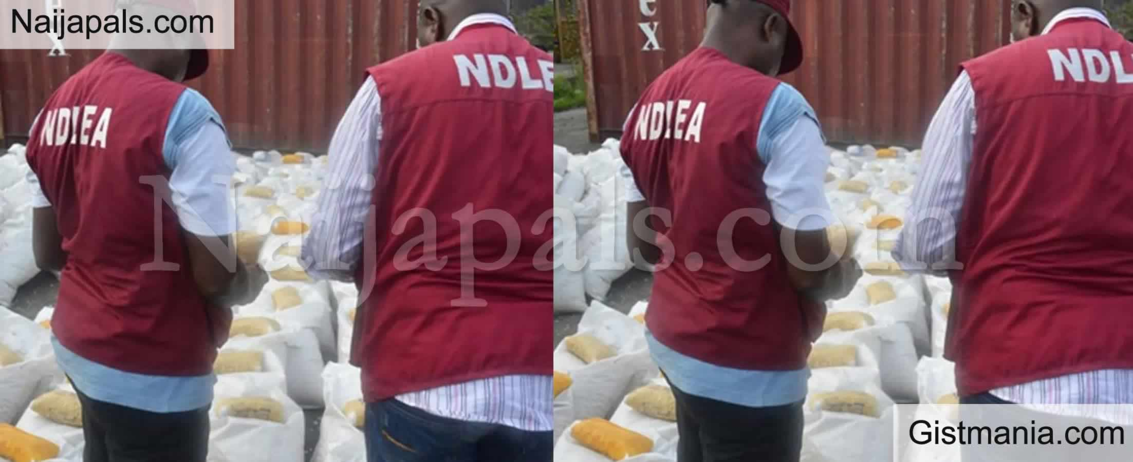 <img alt='.' class='lazyload' data-src='https://img.gistmania.com/emot/shocked.gif' /> <b>2.3 Tonnes Of Indian Hemp Intercepted, 112 Drug Offenders Arrested By NDLEA In Yobe</b>