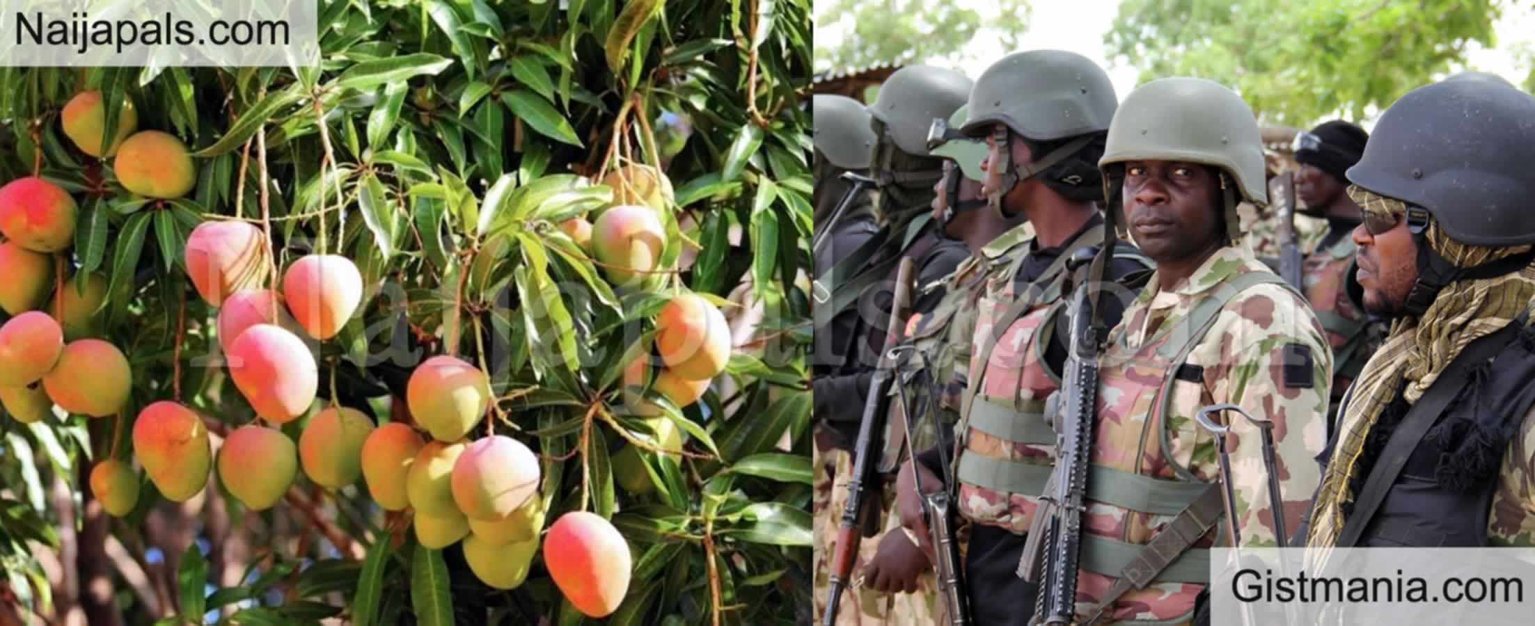 <img alt='.' class='lazyload' data-src='https://img.gistmania.com/emot/news.gif' /> <b>Soldier Tortures 10-Year-Old To Death For Plucking Mangoes In Army Barracks In Kaduna State</b>