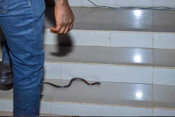 Image result for Snake Reportedly Attacks RCCG Pastor On Altar (Photo)""
