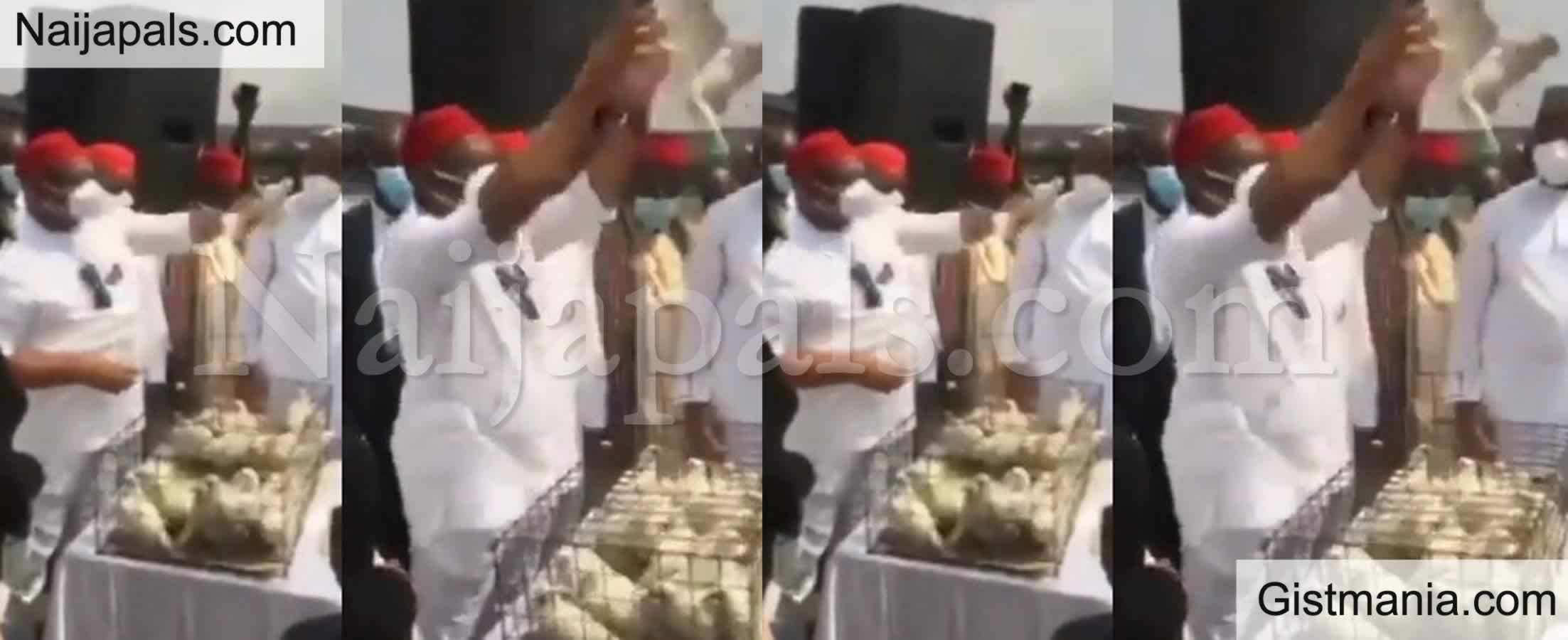 <img alt='.' class='lazyload' data-src='https://img.gistmania.com/emot/video.gif' /> Video: <b>Pigeons Also Refused To Fly At The Armed Forces Remembrance Day Celebration In Imo</b>