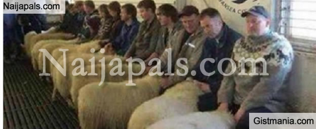 sheep_brothel.jpg